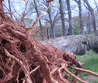 Georgians could be injured by falling limbs caused by Hurricane Irma's gusty winds. Trees may fall, especially given Georgia's wet soils and previous drought stress on trees. Fallen trees could down power lines and eliminate electrical power to Georgia houses and businesses as a result of the storm.