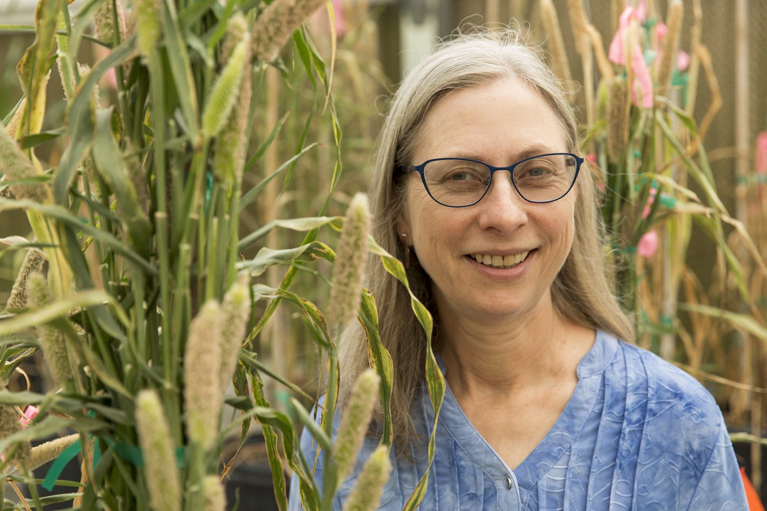 Peggy Ozias-Akins, a global leader in the application of biotechnology for crop improvement, has been named UGA's recipient of the SEC Faculty Achievement Award. She is pictured in her greenhouse surrounded by Pennisetum (pearl millet) hybrid plants.