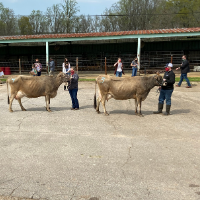 The Gordon County Senior 4-H Team winners will represent Georgia at the National 4-H Dairy Judging Contest in Wisconsin this fall.