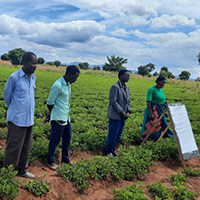 Farmers participate in a seed multiplication project led by extension personnel in Malawi.