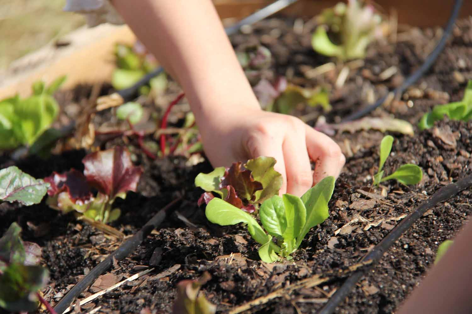 UGA Extension offices are often a critical resource for many Farm to School programs and gardens, offering curricula, publications and sometimes even hands-on labor.
