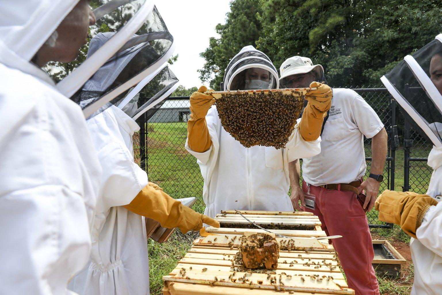 UGA Helps Honeybees