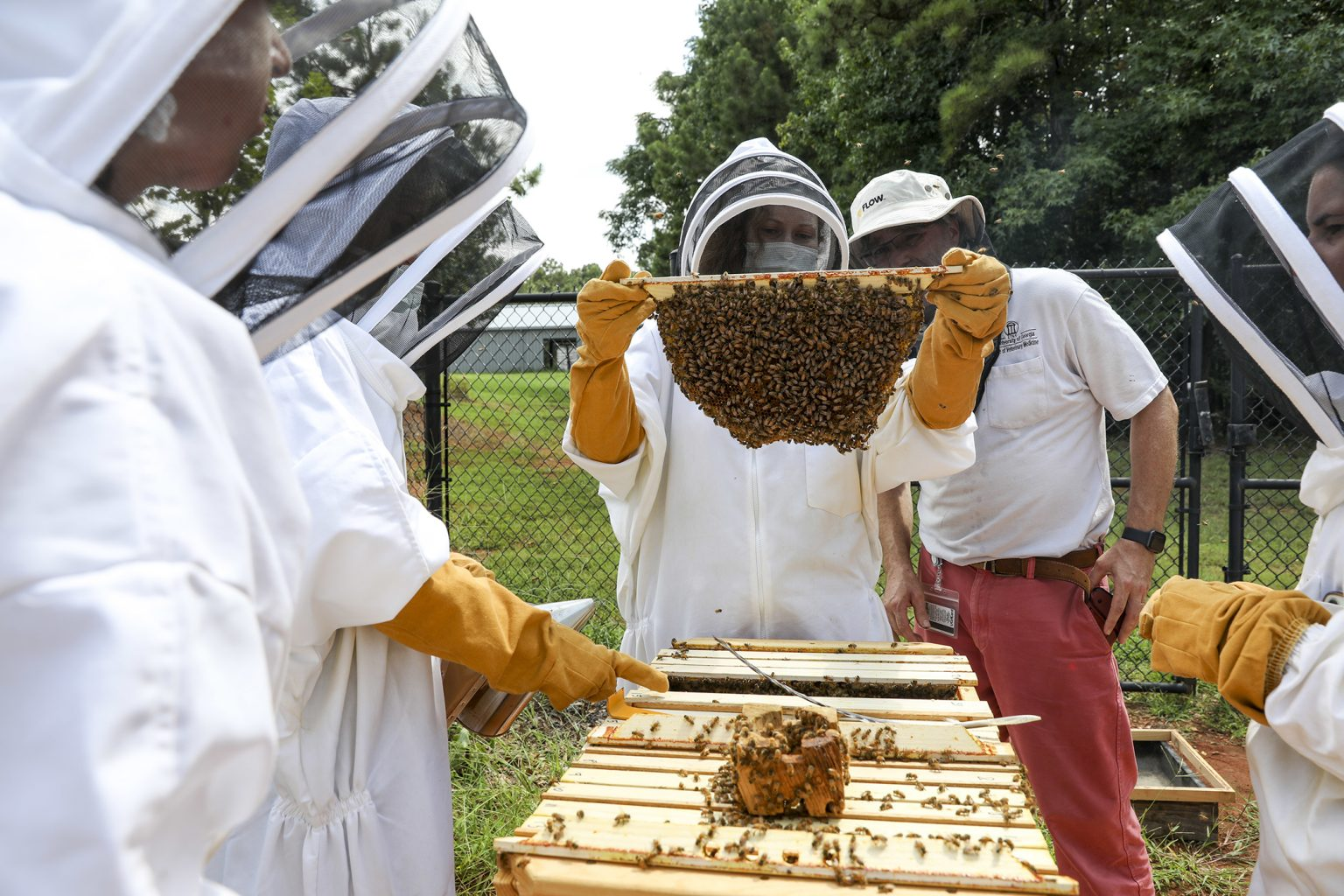 (Center, L-R) Resident Dr. Megan Partyka and Dr. Joerg Mayer inspect a beehive frame during a beekeeping class. (Photo by Dorothy Kozlowski/UGA)