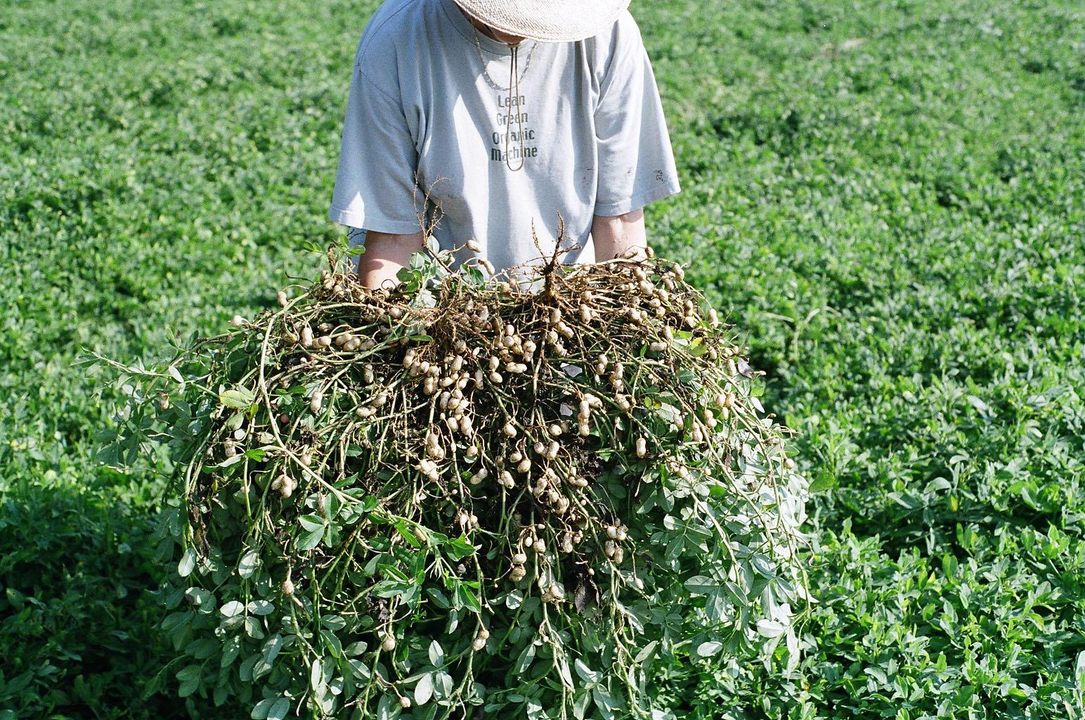 Georgia farmer Relinda Walker displays organic peanuts on her farm.