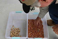 An innovative small-scale sheller can be adjusted to shell various sizes of nuts grown in different geographies. By replacing the sheller basket of the machine and passing unshelled nuts through twice, a user speed up the monotonous task with few broken or split nuts. (Photo by Allison Floyd)