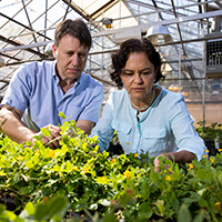 Professor David Bertioli and senior research scientist Soraya Leal-Bertioli work together with peanut plants in their greenhouses at the Center for Applied Genetic Technologies.