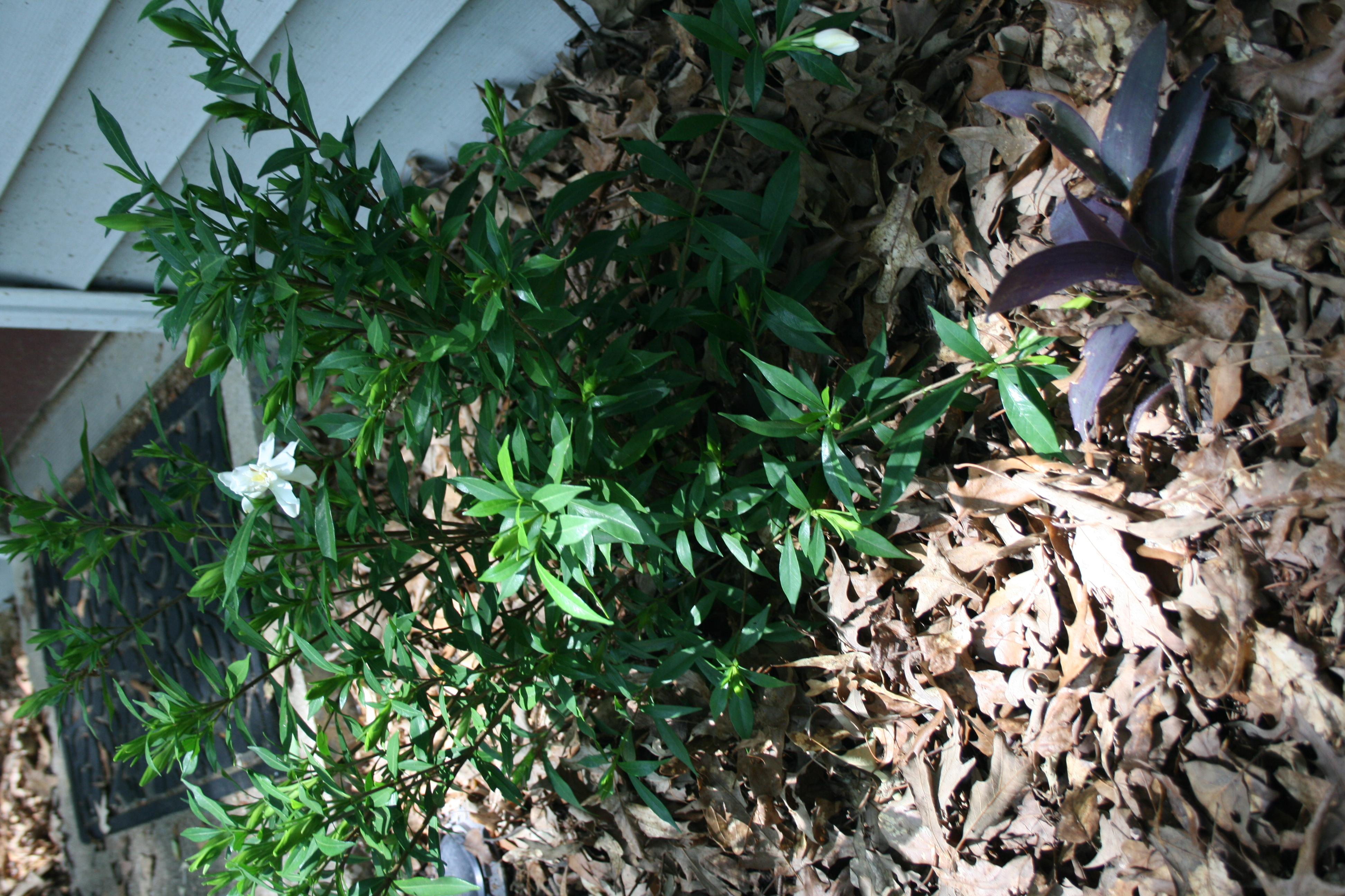 A layer of natural mulch around plants will help protect soil moisture from evaporation and provide organic material for your soils.