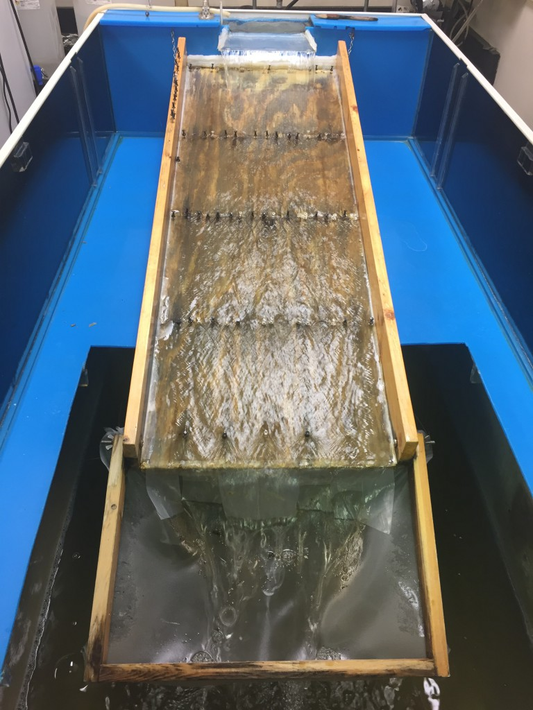"""The black fly colony is based around aquatic rearing units converted from salt water aquariums. The units incorporate a """"runway"""" that serves as an artificial stream and provides the surface where the black fly larvae attach, develop and pupate."""
