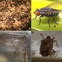 Summer Pests