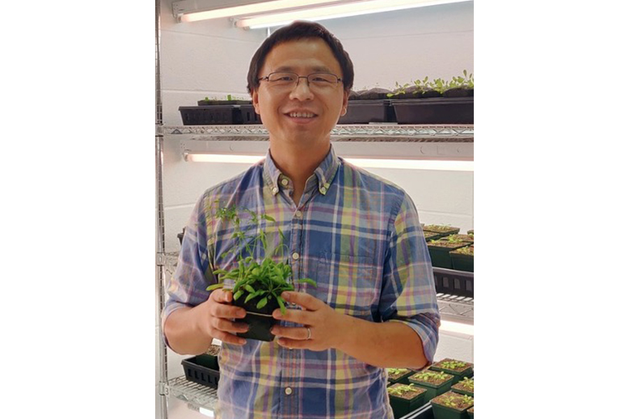 Assistant Professor Li Yang works in a controlled environment growth room for Arabidopsis thaliana research.