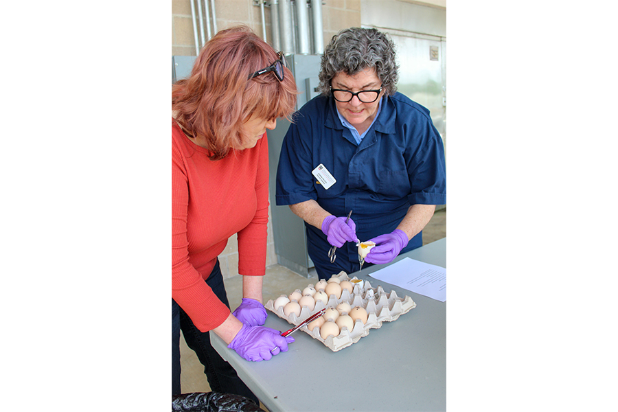 Poultry Science Professor Jeanna Wilson (right) works with Denise Backus, a guidance counselor from East Jackson Comprehensive High School, during an Avian Academy session.