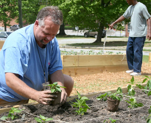 Atlanta Mission resident Joel Cooper plants peppers in a garden plot. Cooper and other residents are tending the garden to learn a skill and provide produce for the mission kitchen.