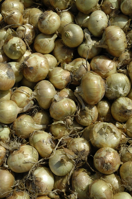 A large pile of Vidalia onions