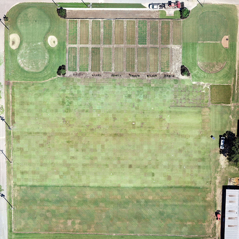 A drone photo shows turfgrass research plots on the UGA Tifton campus.