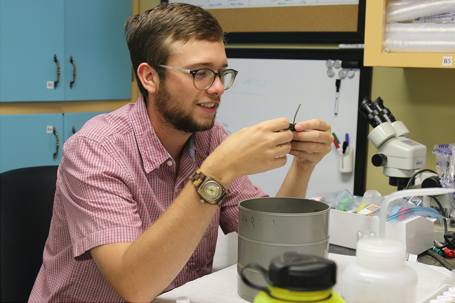 Graduate student Carson Bowers sorts arthropods collected during the study.