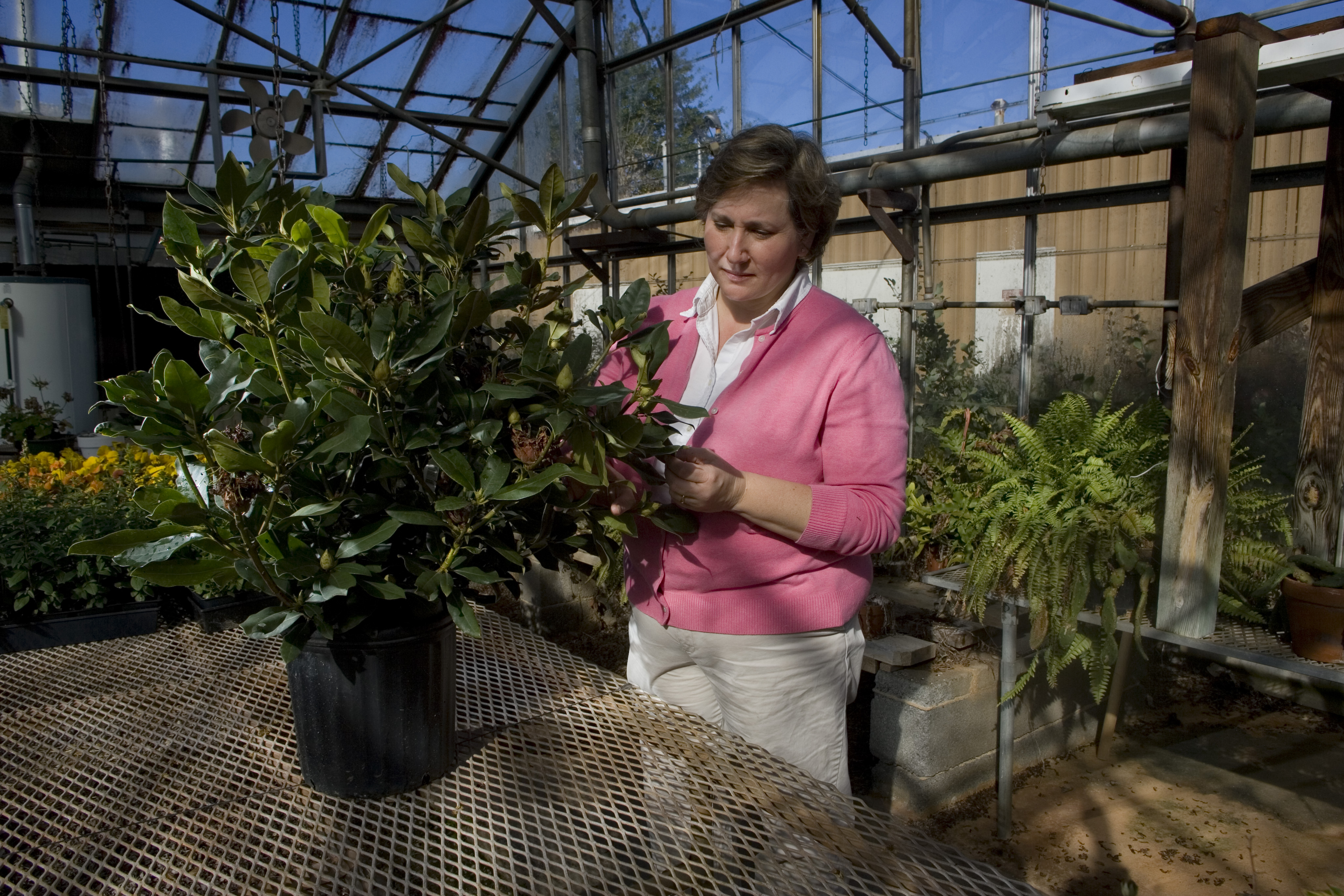 When buying nursery plants, University of Georgia Cooperative Extension experts say check plants carefully to make sure you don't bring home insects, diseases or weeds.