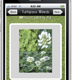Turfgrass flash card application developed for students by UGA turfgrass experts.