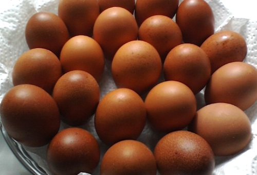 Fresh brown eggs from chickens raised by a Pike County, Ga., farmer.