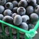 Unpredictable Georgia weather could reduce the number of blueberries on backyard garden plants this year.