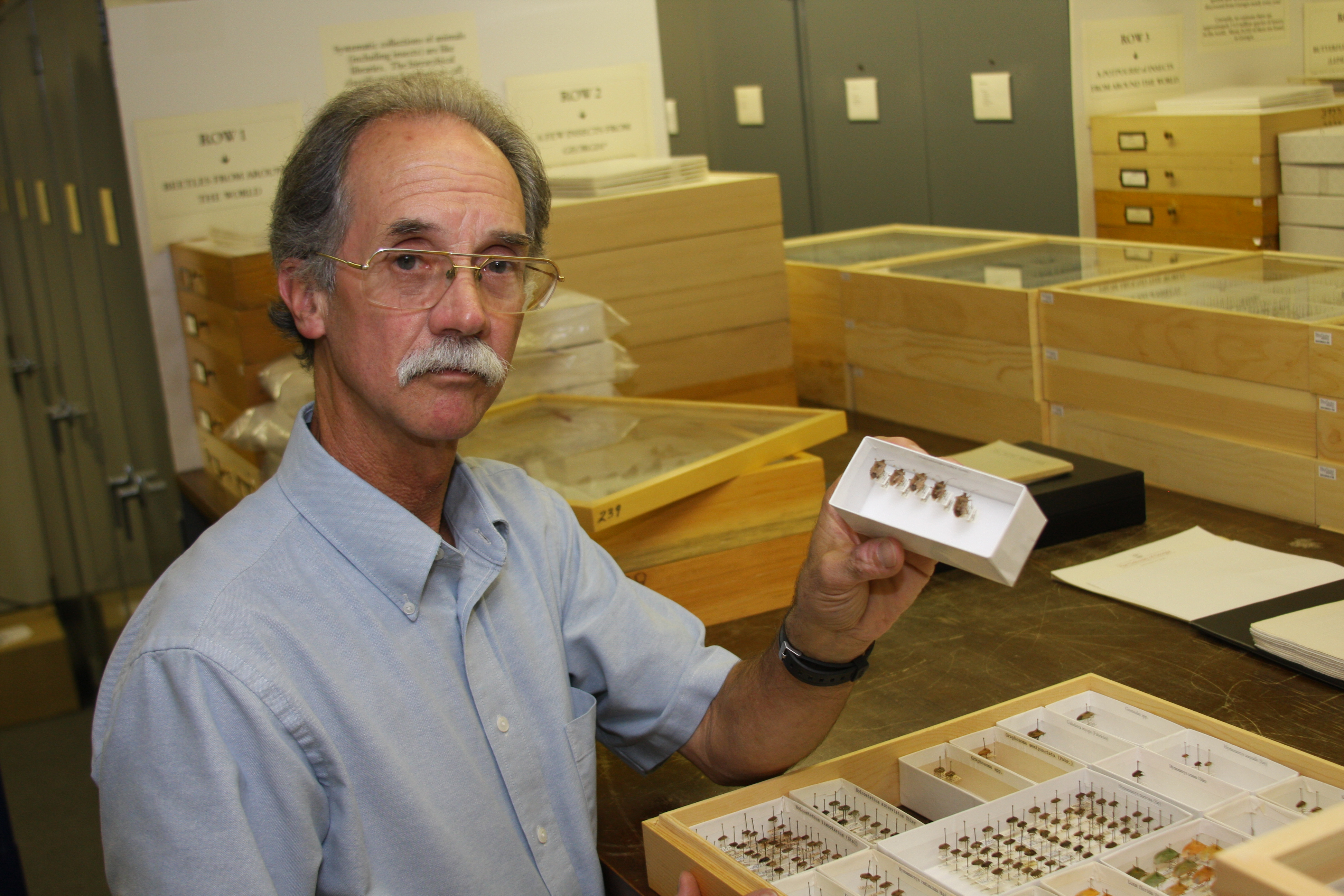 Rick Hoebeke, curator for the insect collection at the Georgia Museum of Natural History, identified the first non-native invasive brown marmorated stink bug in the U.S. in 2001.