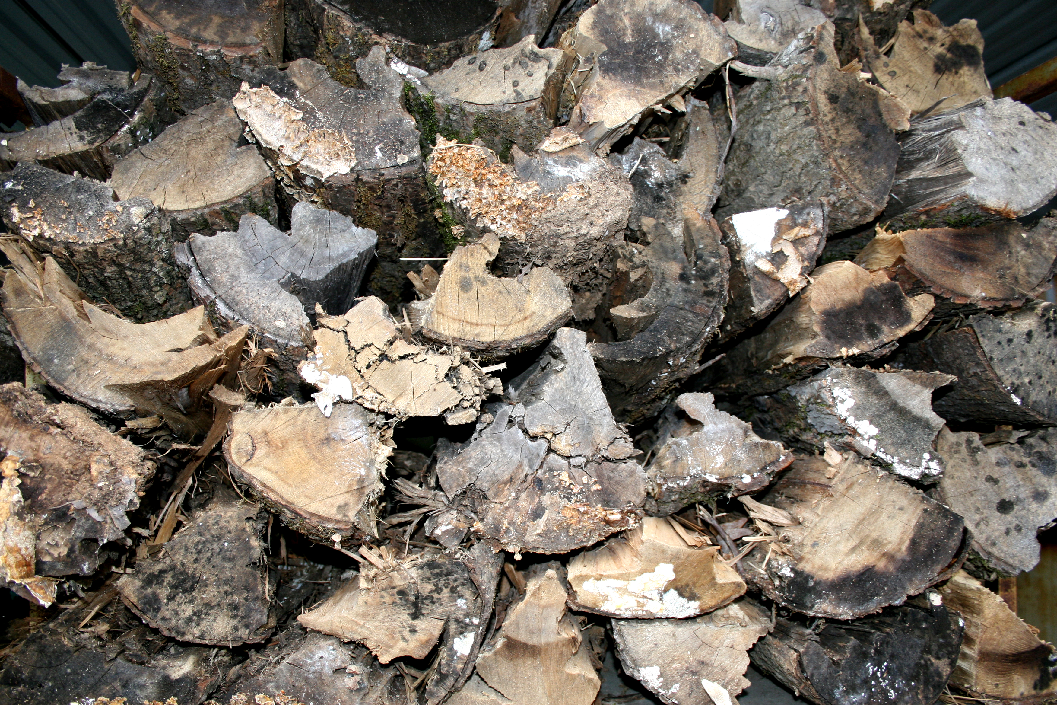 Burning freshly cut wood is very inefficient as a cord of freshly cut oak can contain the equivalent to five and a half 55-gallon drums of water.