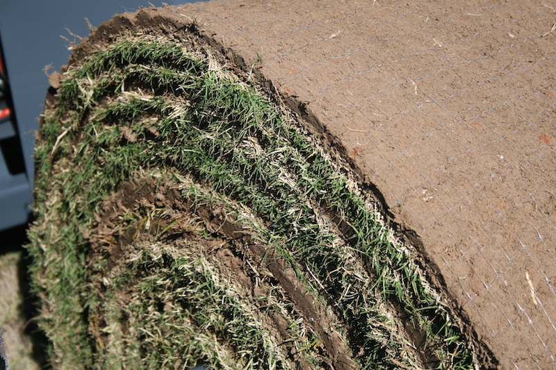 A roll of freshly harvested sod