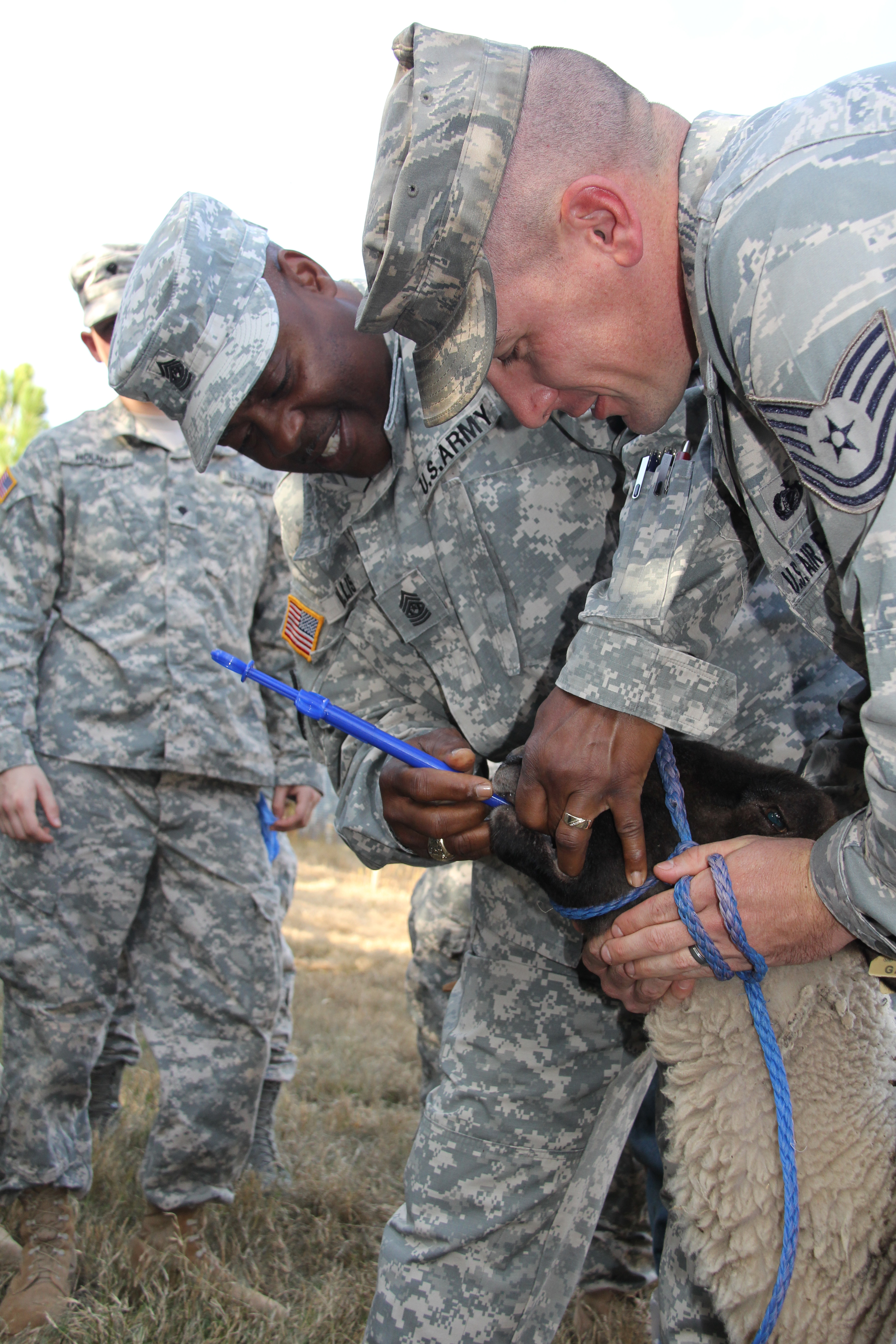 During a previous year's ADT training, Command Sergeant Major Tony Willis practices using a pill popper to dispense medicine to a sheep while Tech Sergeant Kody Jorgensen holds the ewe. Drs. Will Getz and Seyedmehdi Mobini of Fort Valley State University helped UGA agricultural experts train the Georgia National Guardsmen for a mission in Afghanistan.