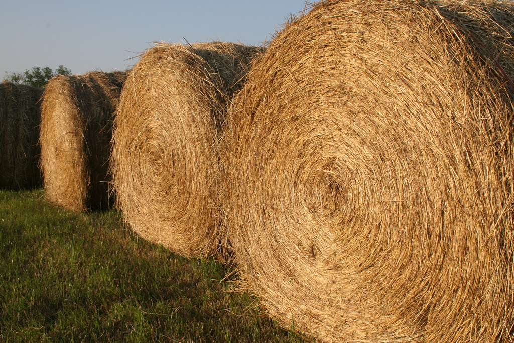 Everything hay-related, from weed control to marketing, will be covered at the up-coming Southeast Hay Convention set for March 6-7 in Tifton, Ga.