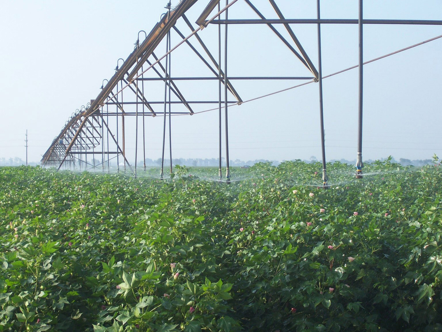Georgia farmers will need 20 percent more water to grow their crops in the next four decades, according to a recent report by University of Georgia crop and weather experts.