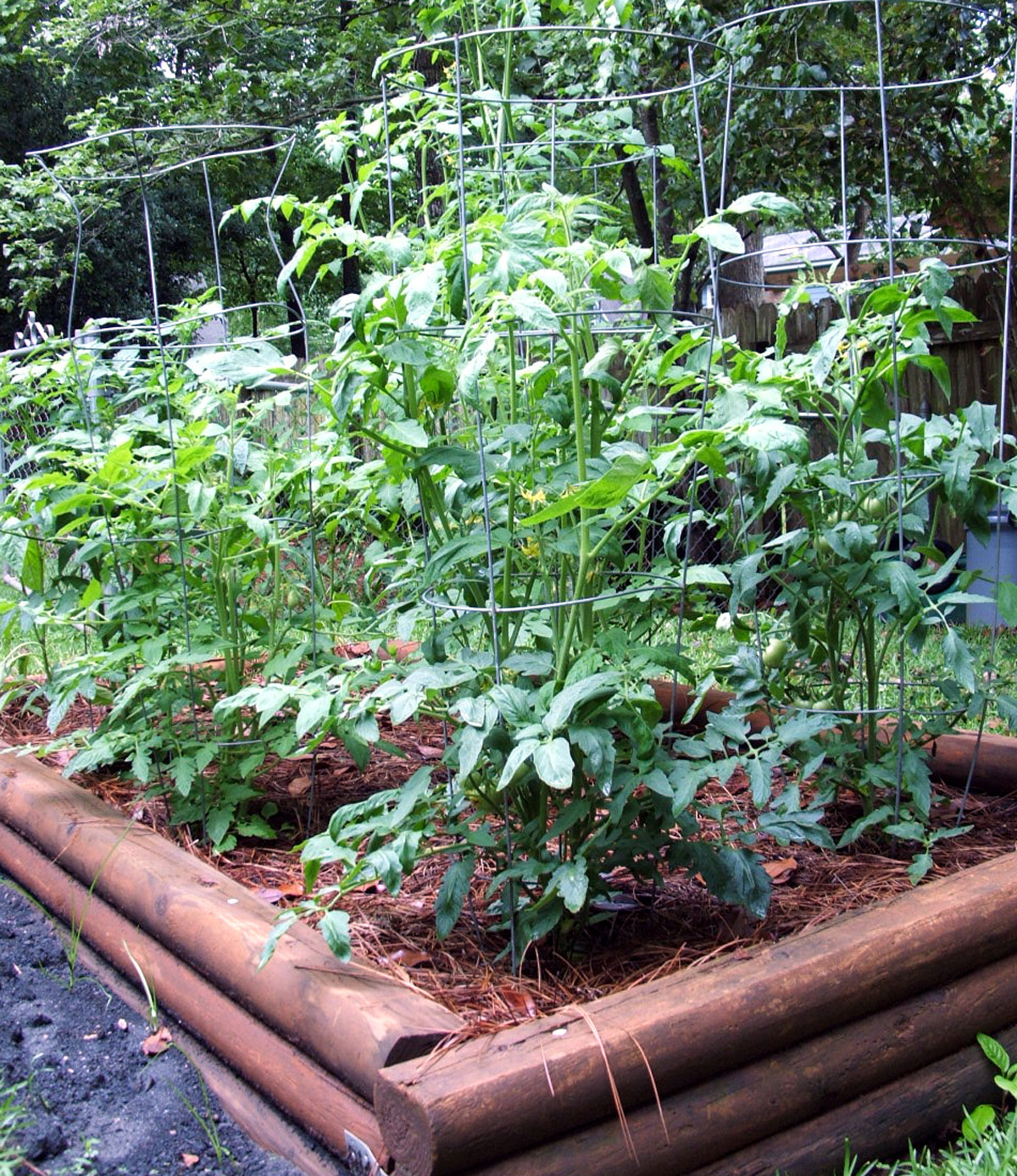 There is still time for Georgia gardeners to plant a late season tomato crop.