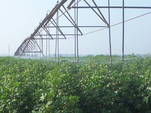 This is a file photo of a center pivot irrigation system being used.