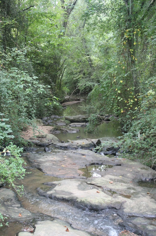 Stream on Westbrook Farm