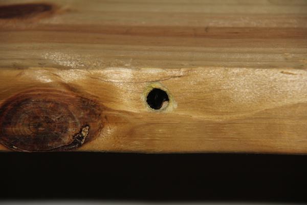 Carpenter bee hole