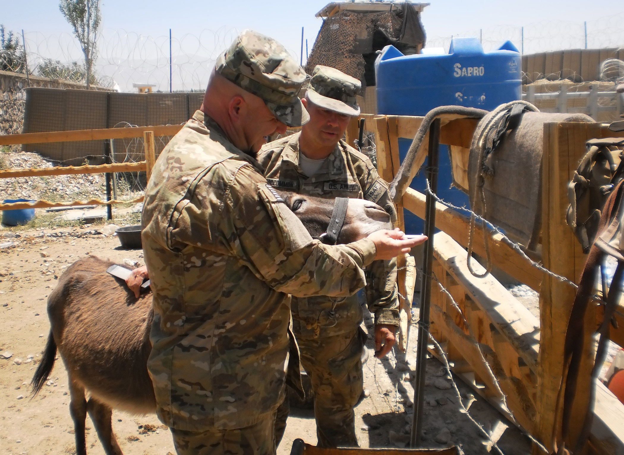 U.S. Army Sgt. Maj. Lynward Hall (left), non-commissioned officer-in-charge from Statesboro, Ga., and U.S. Army Maj. George McCommon, veterinarian from Macon, Ga., administer worm medication to a donkey on Combat Outpost Baraki Barak, Afghanistan, June 21. McCommon and Hall both with the Georgia Agribusiness Development Team, traveled to COP Baraki Barak to provide U.S. Army donkeys with routine preventive health care. (Photo by U.S. Army Sgt. Christopher Ellis)
