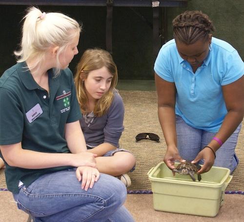 Reptiles and amphibians at Rock Eagle