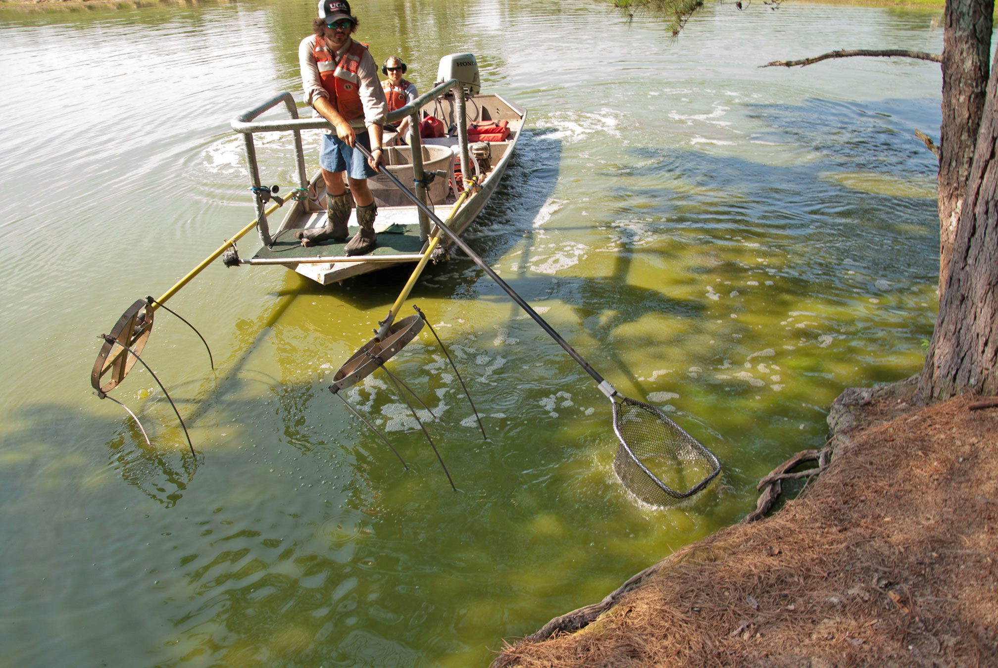 With the summer heat and sporadic rainfall, conditions are right for farm ponds to become inundated with harmful algal blooms.