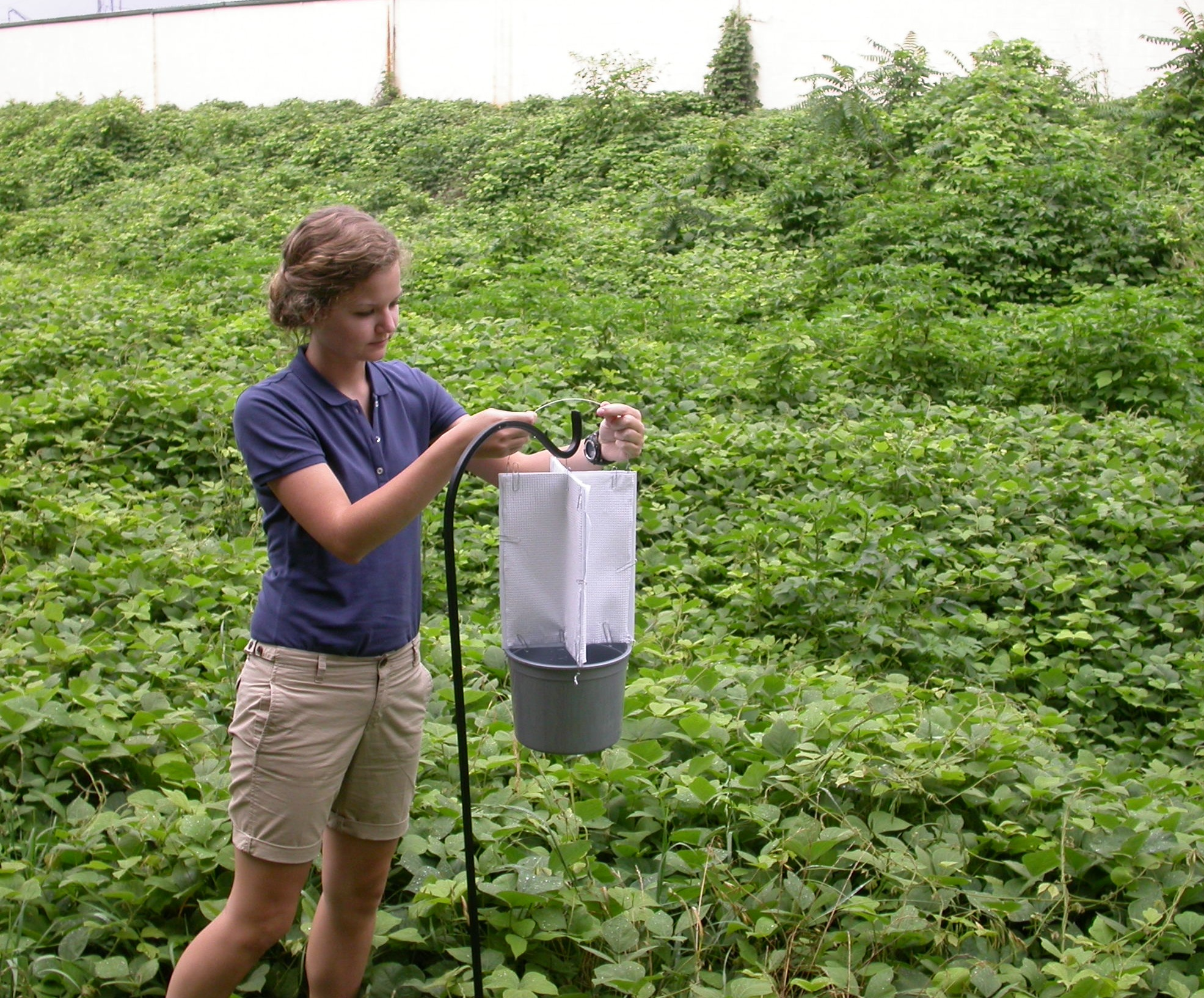 University of Georgia entomology intern Anna Marie Heape places a kudzu bug trap in a kudzu patch on the UGA campus in Griffin, Ga.